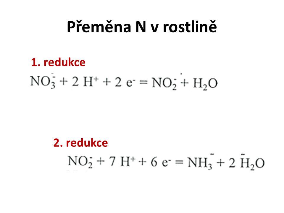 Přeměna N v rostlině 1. redukce 2. redukce