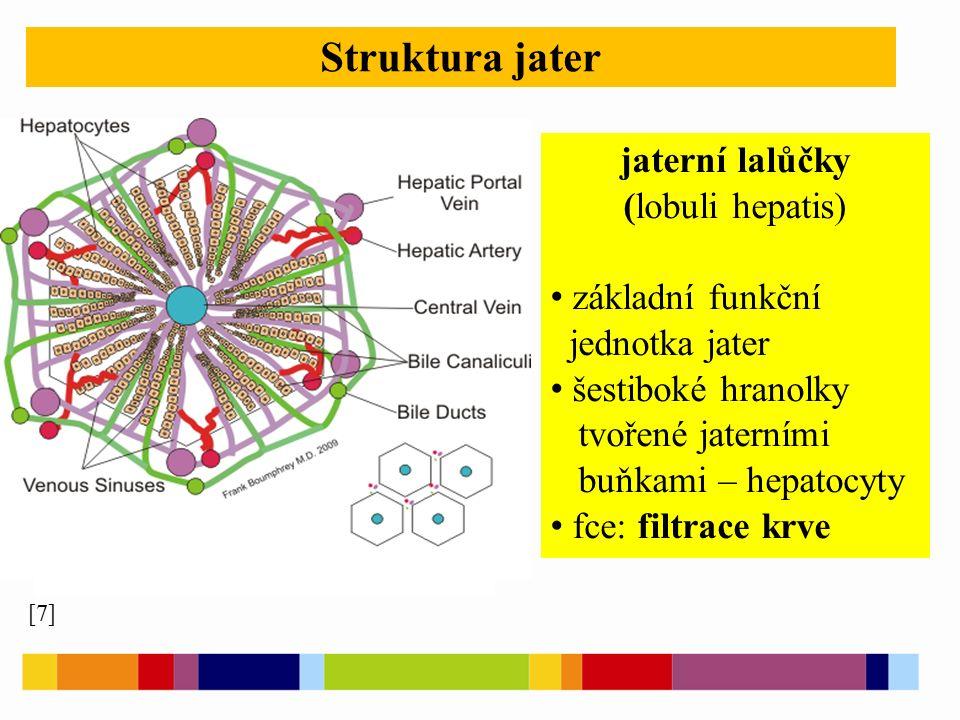 Struktura jater [7] jaterní lalůčky (lobuli hepatis) základní funkční jednotka jater šestiboké hranolky tvořené jaterními buňkami – hepatocyty fce: filtrace krve