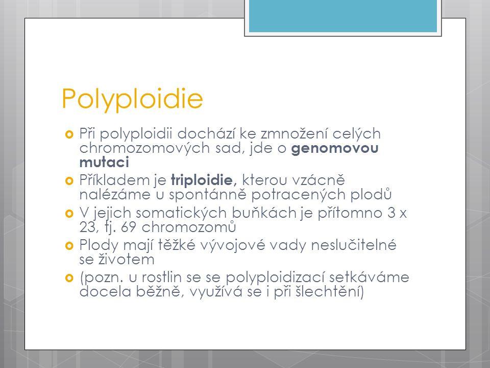 Polyploidie  Při polyploidii dochází ke zmnožení celých chromozomových sad, jde o genomovou mutaci  Příkladem je triploidie, kterou vzácně nalézáme u spontánně potracených plodů  V jejich somatických buňkách je přítomno 3 x 23, tj.