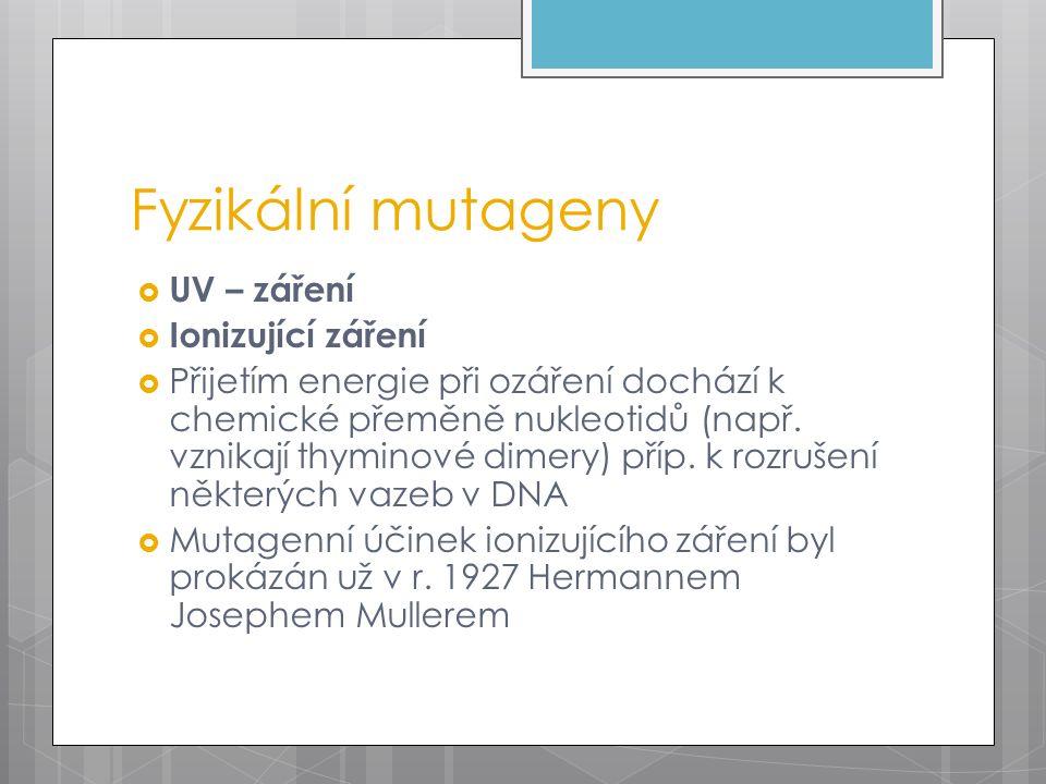 Fyzikální mutageny  UV – záření  Ionizující záření  Přijetím energie při ozáření dochází k chemické přeměně nukleotidů (např.