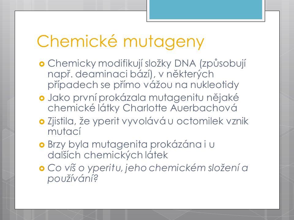 Chemické mutageny  Chemicky modifikují složky DNA (způsobují např. deaminaci bází), v některých případech se přímo vážou na nukleotidy  Jako první p