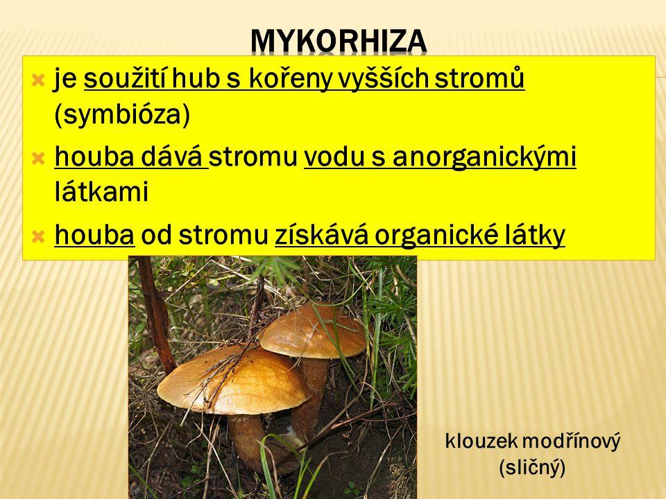  je soužití hub s kořeny vyšších stromů (symbióza)  houba dává stromu vodu s anorganickými látkami  houba od stromu získává organické látky klouzek