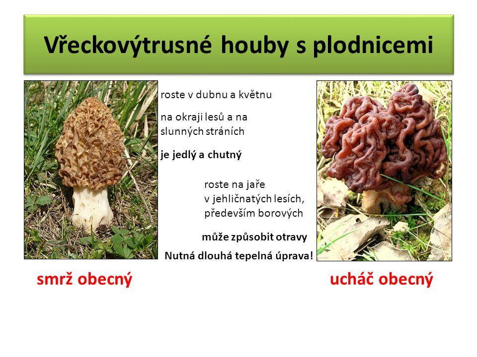 Vřeckovýtrusné houby s plodnicemi roste v dubnu a květnu na okraji lesů a na slunných stráních je jedlý a chutný smrž obecný roste na jaře v jehličnatých lesích, především borových může způsobit otravy Nutná dlouhá tepelná úprava.