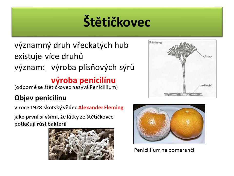 Štětičkovec významný druh vřeckatých hub existuje více druhů význam:výroba plísňových sýrů výroba penicilínu (odborně se štětičkovec nazývá Penicillium) Objev penicilínu v roce 1928 skotský vědec Alexander Fleming jako první si všiml, že látky ze štětičkovce potlačují růst bakterií Penicillium na pomeranči