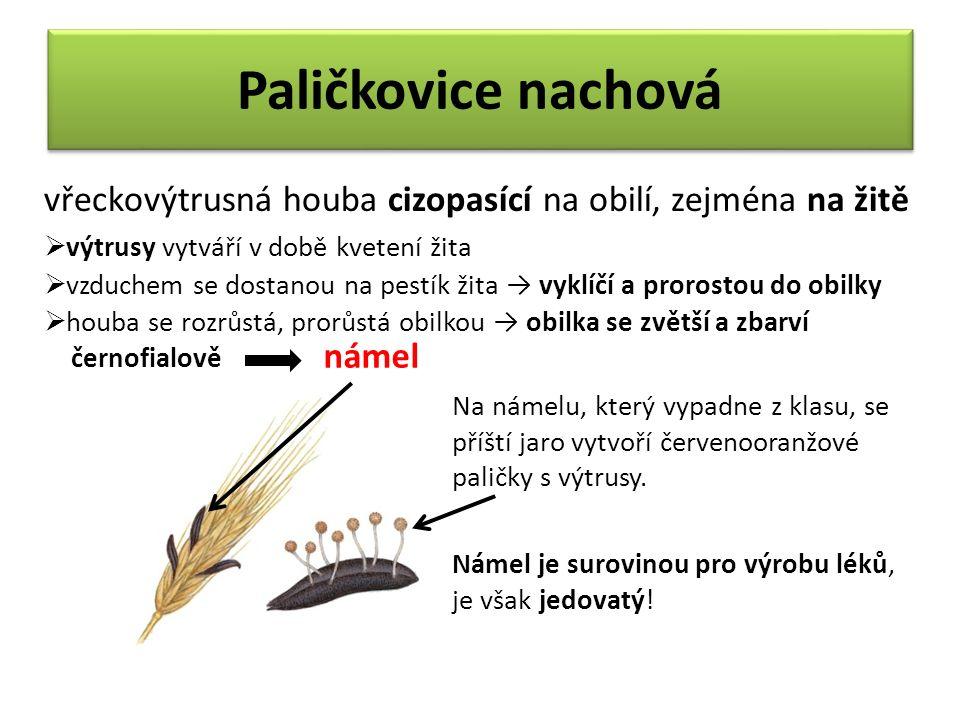 Paličkovice nachová vřeckovýtrusná houba cizopasící na obilí, zejména na žitě  výtrusy vytváří v době kvetení žita  vzduchem se dostanou na pestík žita → vyklíčí a prorostou do obilky  houba se rozrůstá, prorůstá obilkou → obilka se zvětší a zbarví černofialově námel Na námelu, který vypadne z klasu, se příští jaro vytvoří červenooranžové paličky s výtrusy.