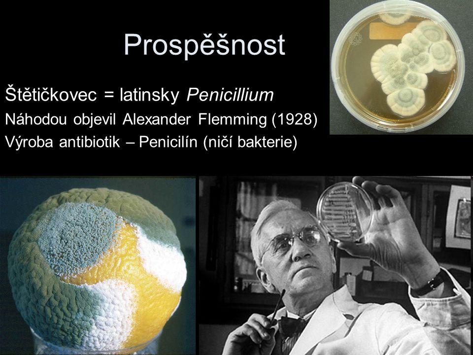 Prospěšnost Štětičkovec = latinsky Penicillium Náhodou objevil Alexander Flemming (1928) Výroba antibiotik – Penicilín (ničí bakterie)