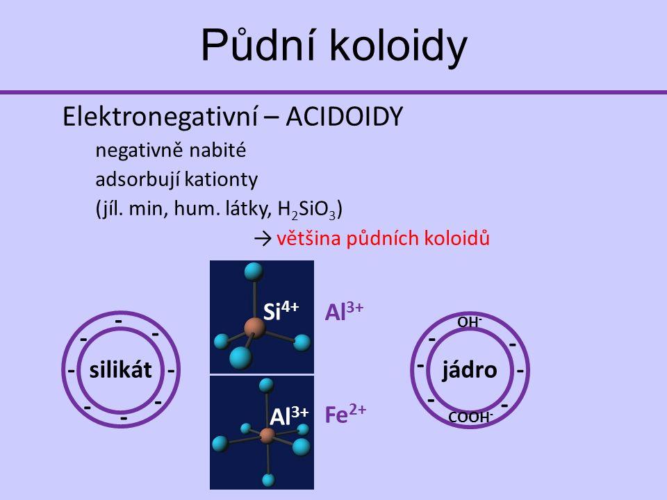 Elektronegativní – ACIDOIDY negativně nabité adsorbují kationty (jíl.
