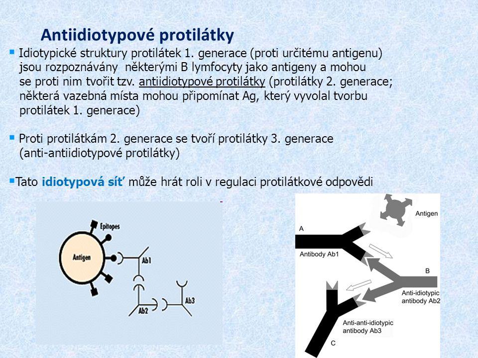 Antiidiotypové protilátky  Idiotypické struktury protilátek 1.
