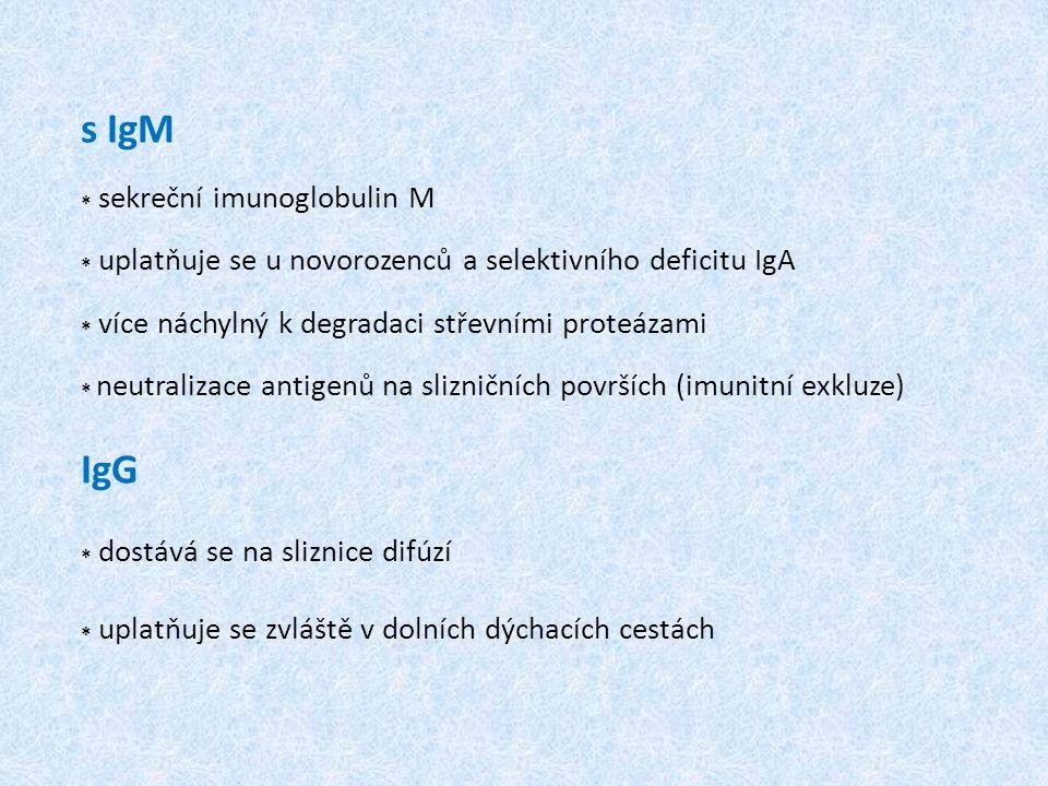 s IgM * sekreční imunoglobulin M * uplatňuje se u novorozenců a selektivního deficitu IgA * více náchylný k degradaci střevními proteázami * neutralizace antigenů na slizničních površích (imunitní exkluze) IgG * dostává se na sliznice difúzí * uplatňuje se zvláště v dolních dýchacích cestách