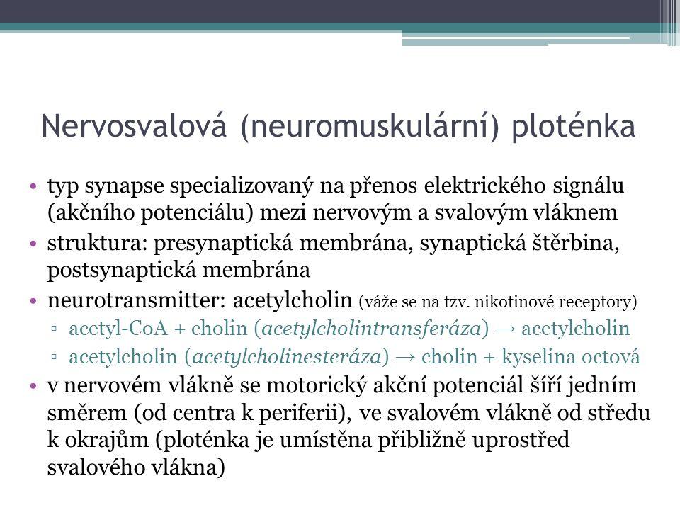 Nervosvalová (neuromuskulární) ploténka typ synapse specializovaný na přenos elektrického signálu (akčního potenciálu) mezi nervovým a svalovým vláknem struktura: presynaptická membrána, synaptická štěrbina, postsynaptická membrána neurotransmitter: acetylcholin (váže se na tzv.