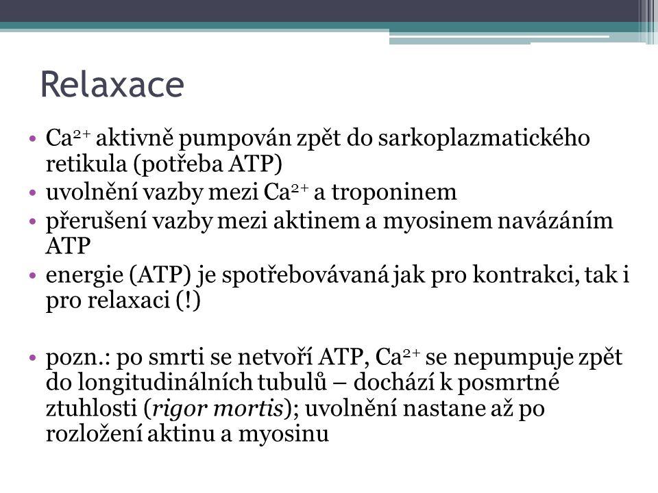 Relaxace Ca 2+ aktivně pumpován zpět do sarkoplazmatického retikula (potřeba ATP) uvolnění vazby mezi Ca 2+ a troponinem přerušení vazby mezi aktinem a myosinem navázáním ATP energie (ATP) je spotřebovávaná jak pro kontrakci, tak i pro relaxaci (!) pozn.: po smrti se netvoří ATP, Ca 2+ se nepumpuje zpět do longitudinálních tubulů – dochází k posmrtné ztuhlosti (rigor mortis); uvolnění nastane až po rozložení aktinu a myosinu