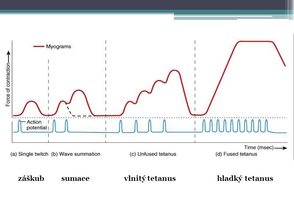 záškub sumace vlnitý tetanus hladký tetanus