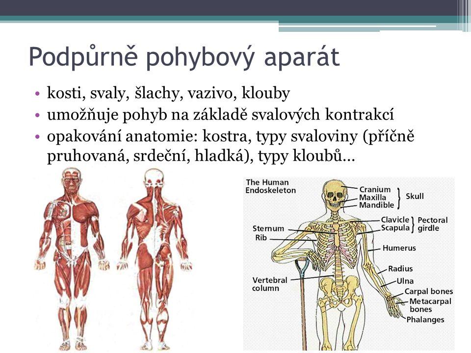 Podpůrně pohybový aparát kosti, svaly, šlachy, vazivo, klouby umožňuje pohyb na základě svalových kontrakcí opakování anatomie: kostra, typy svaloviny (příčně pruhovaná, srdeční, hladká), typy kloubů...