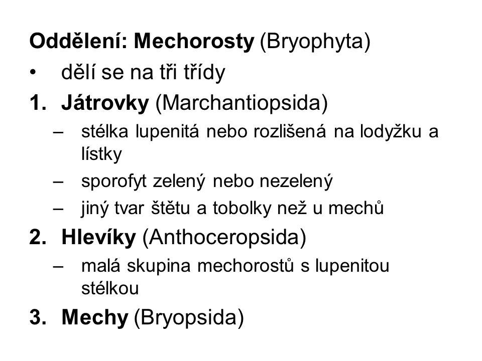 Oddělení: Mechorosty (Bryophyta) dělí se na tři třídy 1.Játrovky (Marchantiopsida) –stélka lupenitá nebo rozlišená na lodyžku a lístky –sporofyt zelen
