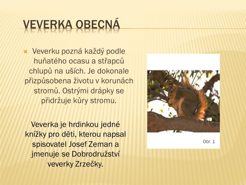  Veverku pozná každý podle huňatého ocasu a střapců chlupů na uších. Je dokonale přizpůsobena životu v korunách stromů. Ostrými drápky se přidržuje k
