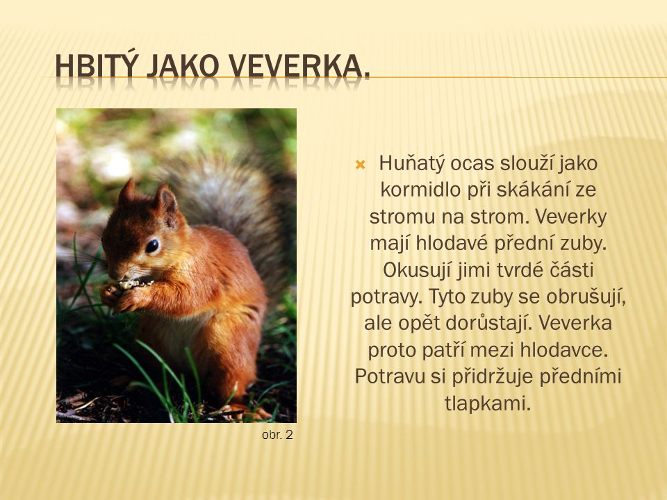  Huňatý ocas slouží jako kormidlo při skákání ze stromu na strom. Veverky mají hlodavé přední zuby. Okusují jimi tvrdé části potravy. Tyto zuby se ob