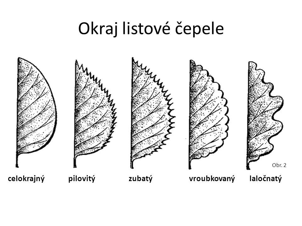 Okraj listové čepele celokrajnýpilovitýzubatývroubkovanýlaločnatý Obr. 2