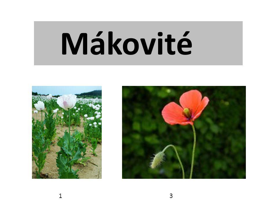 Mákovité 1 3