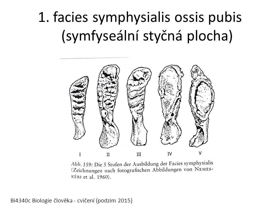 1. facies symphysialis ossis pubis (symfyseální styčná plocha) Bi4340c Biologie člověka - cvičení (podzim 2015)