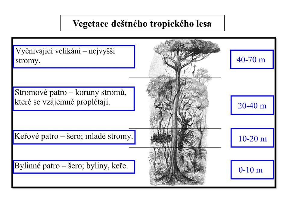 Vegetace deštného tropického lesa