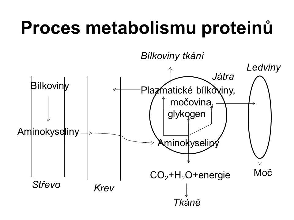 Proces metabolismu proteinů Střevo Krev Tkáně Játra Bílkoviny tkání Plazmatické bílkoviny, močovina, glykogen Bílkoviny CO 2 +H 2 O+energie Aminokyseliny Ledviny Moč