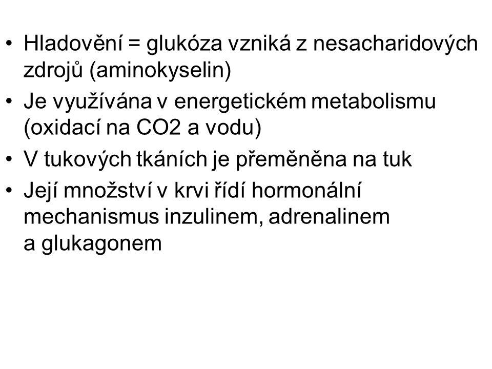 Hladovění = glukóza vzniká z nesacharidových zdrojů (aminokyselin) Je využívána v energetickém metabolismu (oxidací na CO2 a vodu) V tukových tkáních je přeměněna na tuk Její množství v krvi řídí hormonální mechanismus inzulinem, adrenalinem a glukagonem