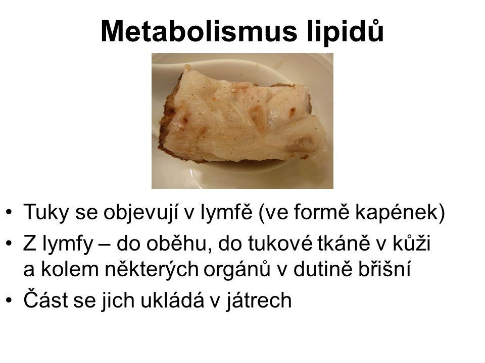 Když je potřeba, tuky se v tukové tkáni a játrech štěpí na glycerol a mastné kyseliny (ty se dostávají do oběhu a oxidují v tkáních) Tuky jsou nejvýznamnější zásobárnou energie