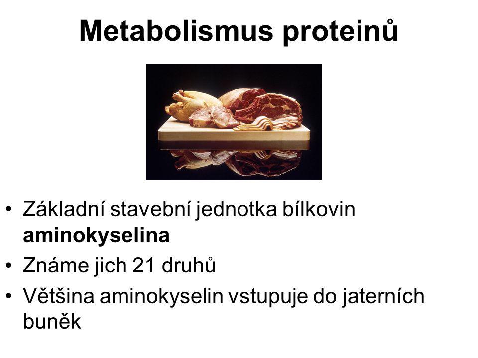 Metabolismus proteinů Základní stavební jednotka bílkovin aminokyselina Známe jich 21 druhů Většina aminokyselin vstupuje do jaterních buněk
