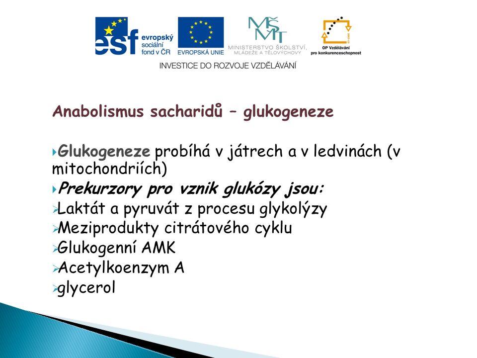 Anabolismus sacharidů – glukogeneze  Glukogeneze probíhá v játrech a v ledvinách (v mitochondriích)  Prekurzory pro vznik glukózy jsou:  Laktát a pyruvát z procesu glykolýzy  Meziprodukty citrátového cyklu  Glukogenní AMK  Acetylkoenzym A  glycerol