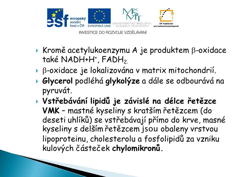  Kromě acetylukoenzymu A je produktem  -oxidace také NADH+H +, FADH 2.   -oxidace je lokalizována v matrix mitochondrií.  Glycerol podléhá glykol