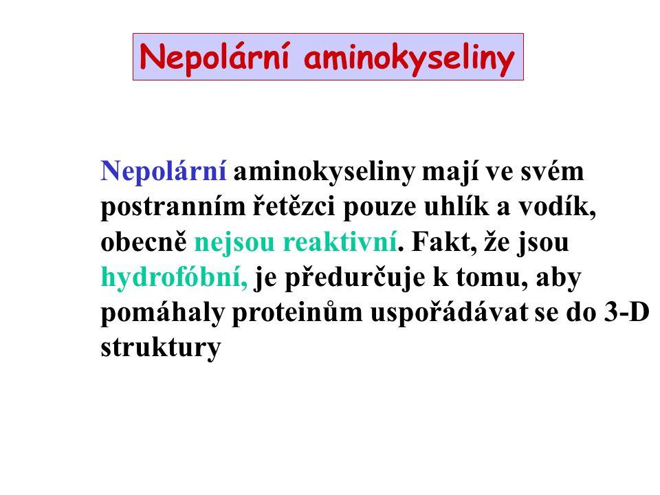 Nepolární aminokyseliny Nepolární aminokyseliny mají ve svém postranním řetězci pouze uhlík a vodík, obecně nejsou reaktivní.