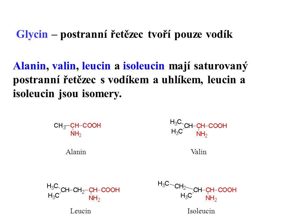 Alanin, valin, leucin a isoleucin mají saturovaný postranní řetězec s vodíkem a uhlíkem, leucin a isoleucin jsou isomery.