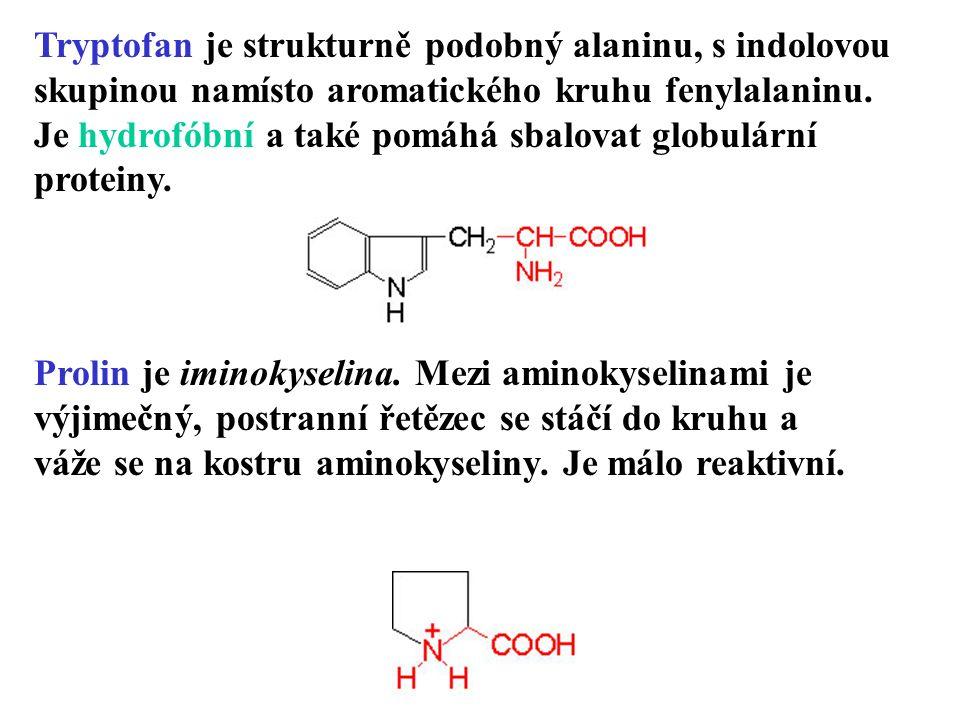 Tryptofan je strukturně podobný alaninu, s indolovou skupinou namísto aromatického kruhu fenylalaninu.