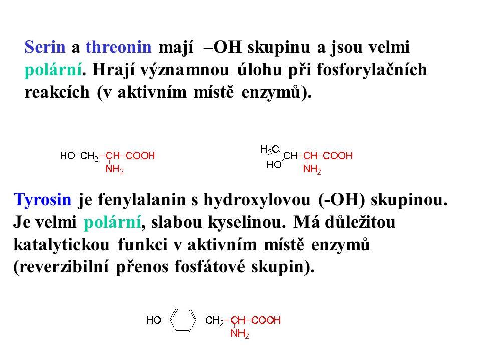 Serin a threonin mají –OH skupinu a jsou velmi polární.