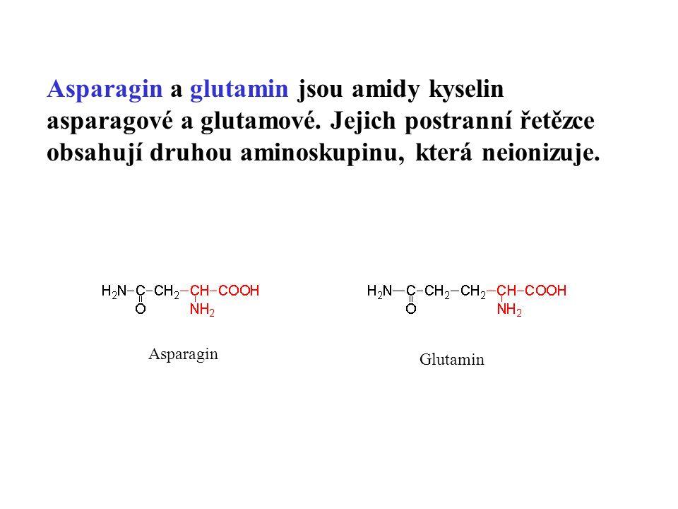 Asparagin a glutamin jsou amidy kyselin asparagové a glutamové.