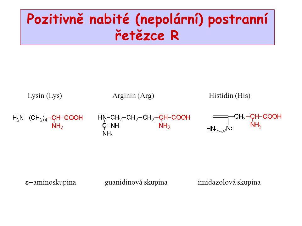 Pozitivně nabité (nepolární) postranní řetězce R  aminoskupina guanidinová skupina imidazolová skupina Lysin (Lys) Arginin (Arg)Histidin (His)