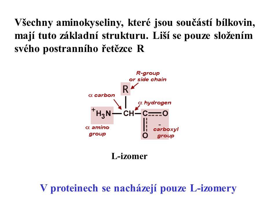 Všechny aminokyseliny, které jsou součástí bílkovin, mají tuto základní strukturu.