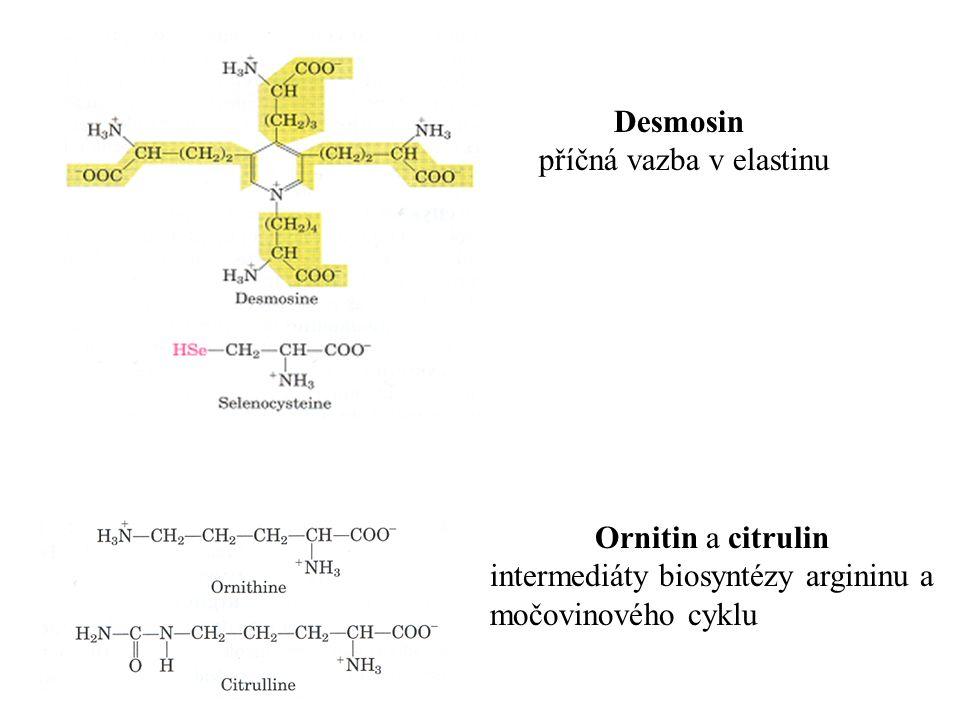 Desmosin příčná vazba v elastinu Ornitin a citrulin intermediáty biosyntézy argininu a močovinového cyklu