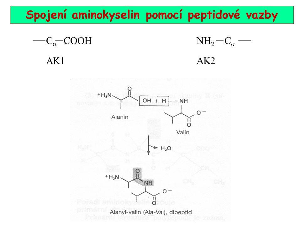 Spojení aminokyselin pomocí peptidové vazby C  COOH NH 2 C  AK1 AK2