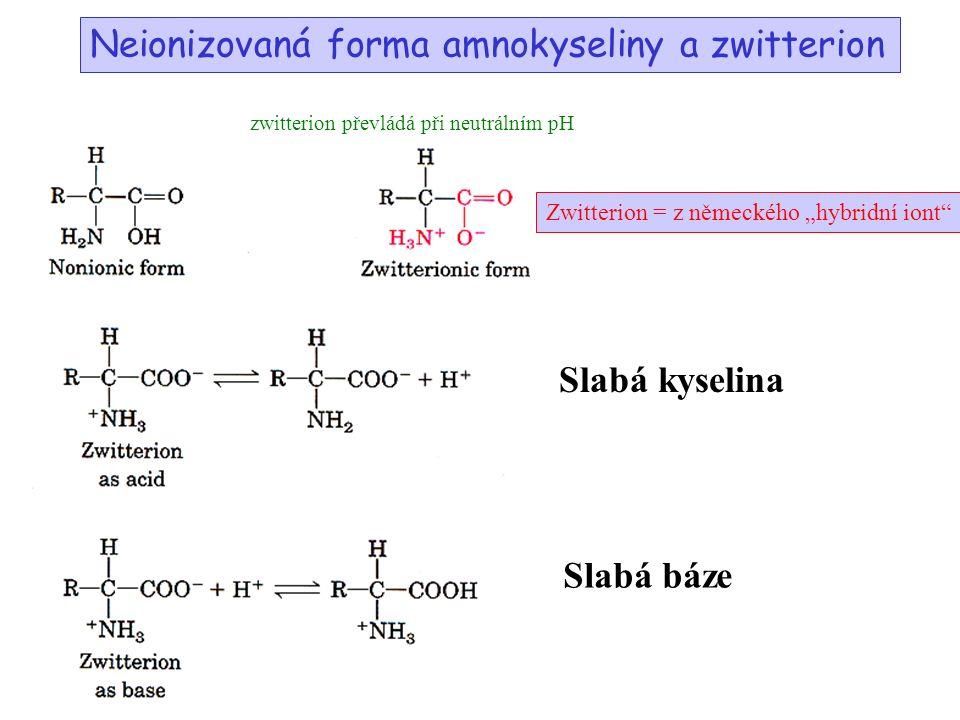 """Neionizovaná forma amnokyseliny a zwitterion zwitterion převládá při neutrálním pH Slabá kyselina Slabá báze Zwitterion = z německého """"hybridní iont"""