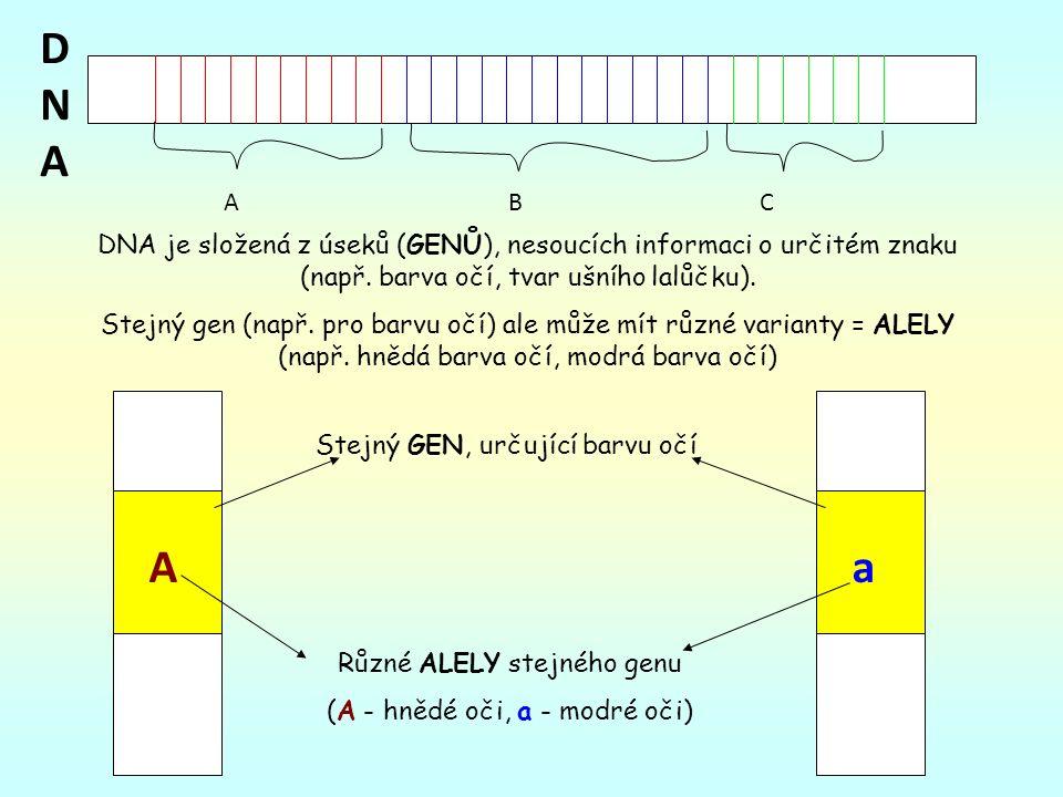 DNA je složená z úseků (GENŮ), nesoucích informaci o určitém znaku (např.