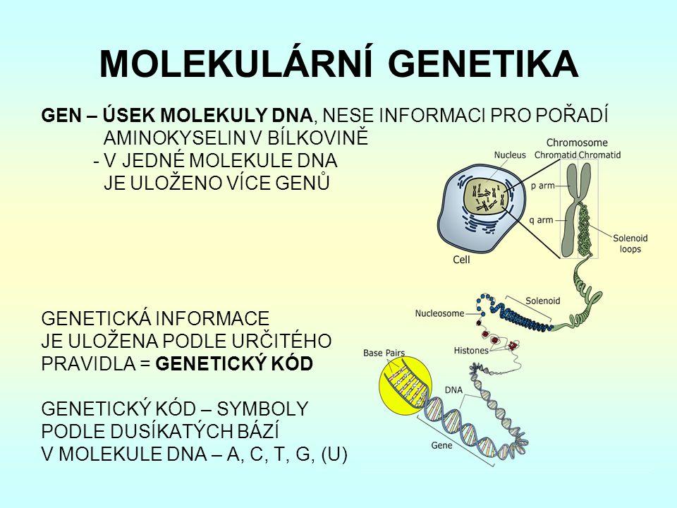 MOLEKULÁRNÍ GENETIKA GEN – ÚSEK MOLEKULY DNA, NESE INFORMACI PRO POŘADÍ AMINOKYSELIN V BÍLKOVINĚ - V JEDNÉ MOLEKULE DNA JE ULOŽENO VÍCE GENŮ GENETICKÁ INFORMACE JE ULOŽENA PODLE URČITÉHO PRAVIDLA = GENETICKÝ KÓD GENETICKÝ KÓD – SYMBOLY PODLE DUSÍKATÝCH BÁZÍ V MOLEKULE DNA – A, C, T, G, (U)