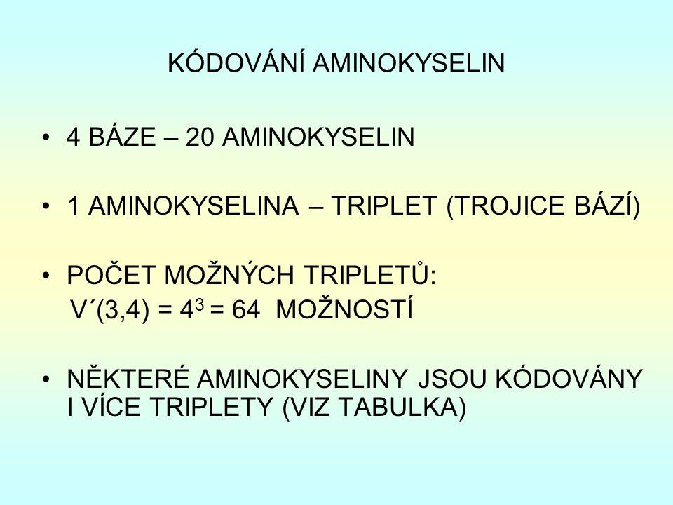 KÓDOVÁNÍ AMINOKYSELIN 4 BÁZE – 20 AMINOKYSELIN 1 AMINOKYSELINA – TRIPLET (TROJICE BÁZÍ) POČET MOŽNÝCH TRIPLETŮ: V´(3,4) = 4 3 = 64 MOŽNOSTÍ NĚKTERÉ AMINOKYSELINY JSOU KÓDOVÁNY I VÍCE TRIPLETY (VIZ TABULKA)