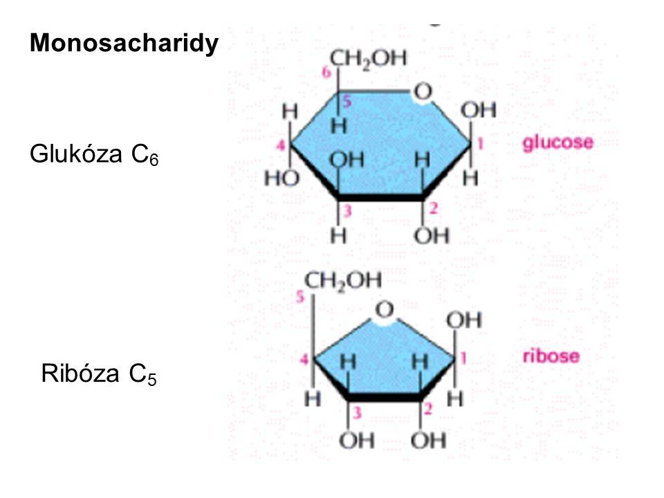 Monosacharidy Glukóza C 6 Ribóza C 5