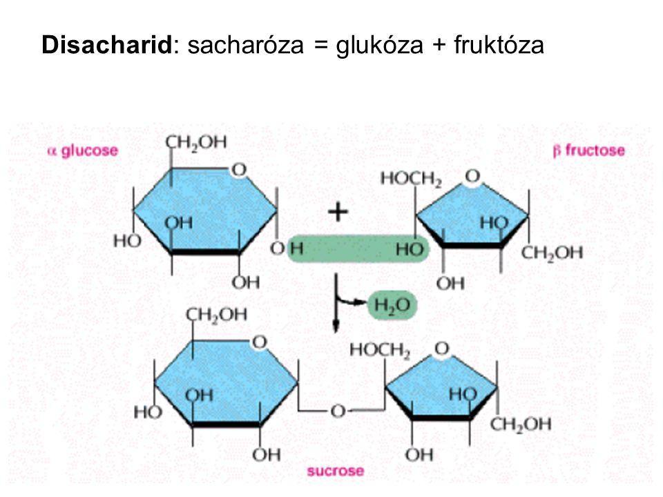 Disacharid: sacharóza = glukóza + fruktóza