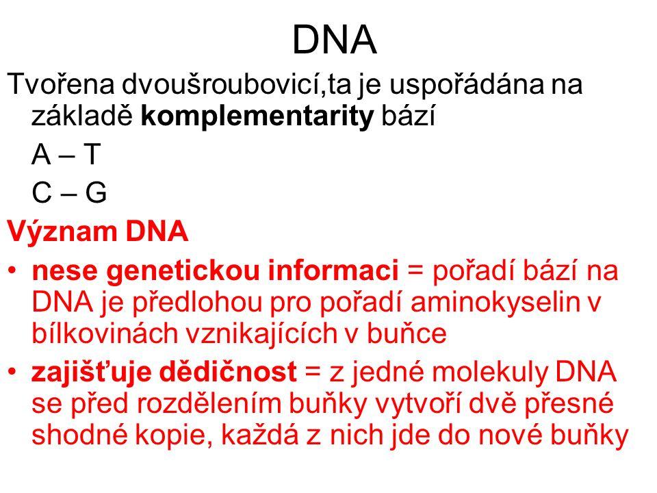 DNA Tvořena dvoušroubovicí,ta je uspořádána na základě komplementarity bází A – T C – G Význam DNA nese genetickou informaci = pořadí bází na DNA je předlohou pro pořadí aminokyselin v bílkovinách vznikajících v buňce zajišťuje dědičnost = z jedné molekuly DNA se před rozdělením buňky vytvoří dvě přesné shodné kopie, každá z nich jde do nové buňky