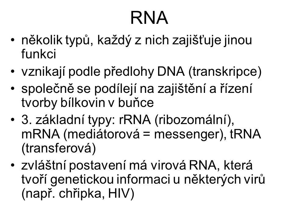 RNA několik typů, každý z nich zajišťuje jinou funkci vznikají podle předlohy DNA (transkripce) společně se podílejí na zajištění a řízení tvorby bílkovin v buňce 3.