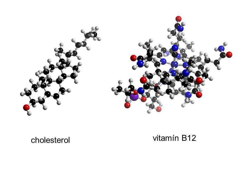 cholesterol vitamín B12
