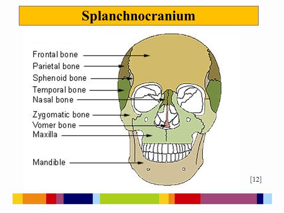 Splanchnocranium [12]