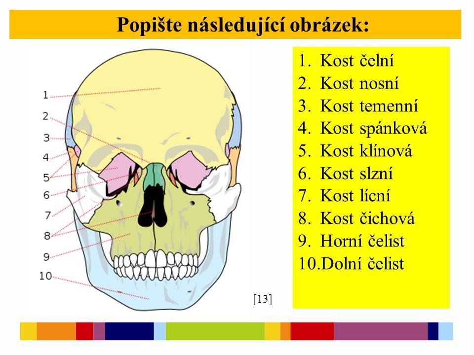 Popište následující obrázek: [13] 1. Kost čelní 2. Kost nosní 3. Kost temenní 4. Kost spánková 5. Kost klínová 6. Kost slzní 7. Kost lícní 8. Kost čic
